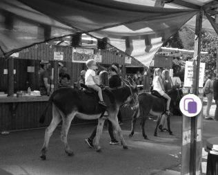 Funky Donkey Festival